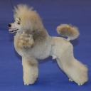 Poodle Medium Grey